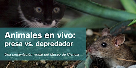 Animales en vivo: presa vs. depredador tickets