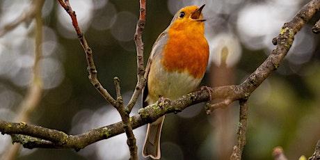 Apprendre à nourrir les oiseaux billets