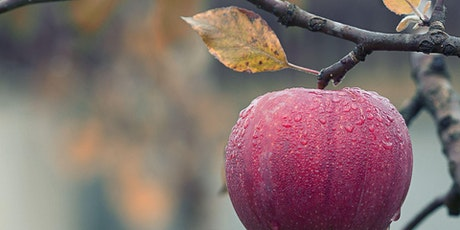 The Goods on Growing and Pruning Fruit Trees - Webinar tickets