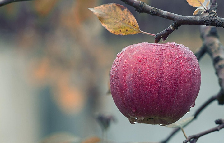 The Goods on Growing and Pruning Fruit Trees - Webinar image