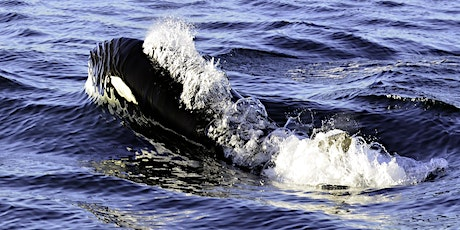 Orca Acoustic Game Show: A Killer Whale Tales Science Activity tickets