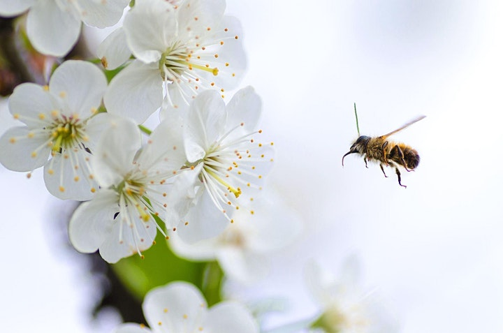Attracting Good Insects & Pollinators - Webinar image