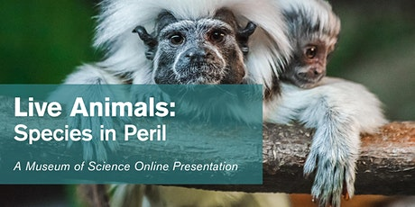 Live Animals: Species in Peril - #Livestream tickets