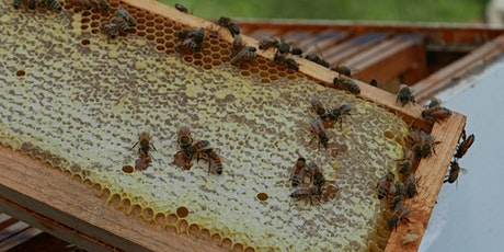 The Buzz on Beekeeping - Virtual Workshop tickets