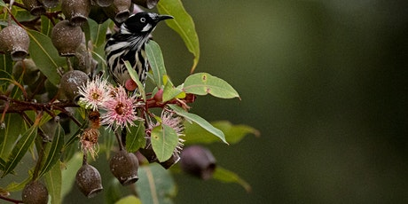 Nature Photography Workshop - Macro, Birds & Creative Abstracts. Cranbourne tickets