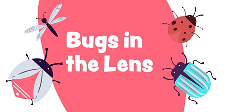 Bugs in the lens tickets
