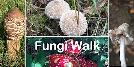 Self Led Fungi Walk at Wellesley Woodlands tickets