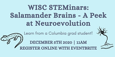 WISC STEMinars: Salamander Brains - A Peek at Neuroevolution billets