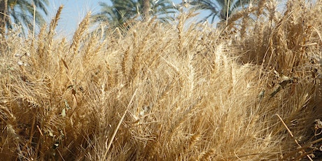 Staple Security: Procuring, Assessing, and Storing Wheat in Egypt tickets