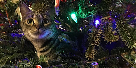 Christmas Treats for Your Cat tickets