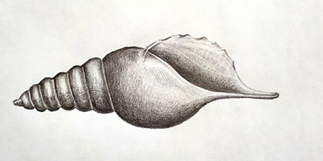 Get Drawing Sea Shells: Art for Wellbeing Workshop tickets