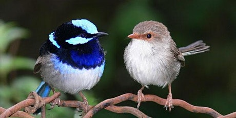 Beautiful birds – attracting small birds to your garden tickets