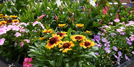 City Renewal Authority Plant Giveaway tickets