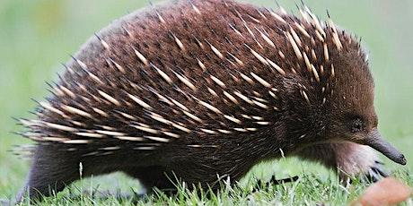 Furry friends – creating a native mammal friendly garden tickets