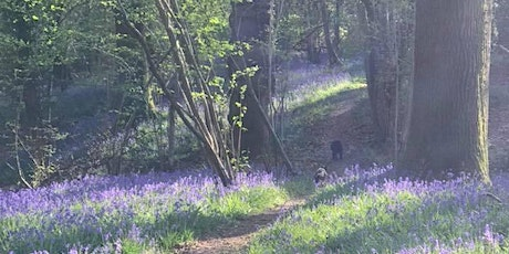 Nature Walk & Picnic at Chiddinglye tickets