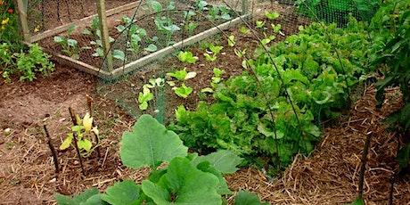 Planning Your Year Round Veggie Garden tickets