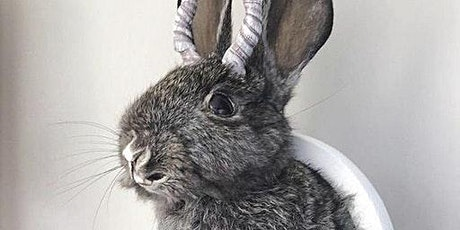 Easter Bunny Taxidermy with Jo Lepeska tickets