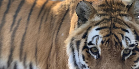Alaska Zoo Admissions, December 2020 tickets