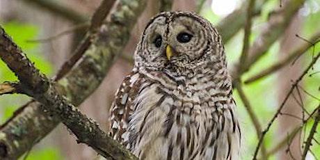 Stanley Park Owls (Online) tickets