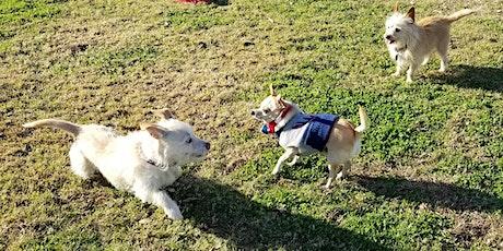 Tiny Paws Fresno Small Dog Social 2/6 tickets