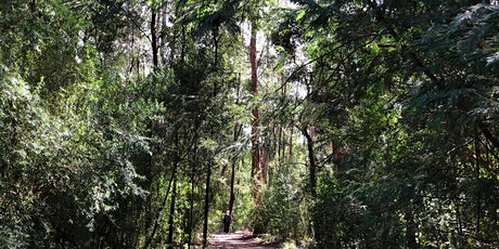 Mini Forest Therapy Walk  - A  fresh bite sized sensory experience. tickets