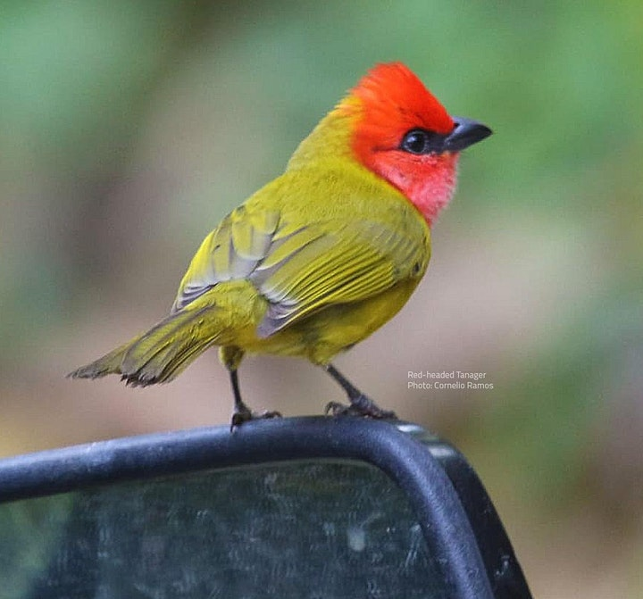 Oaxaca Birding Tour image