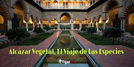 Alcázar Vegetal, El Viaje de las Especies entradas