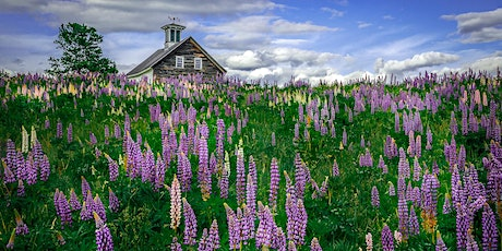 Lupines & Lighthouses tickets