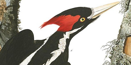 Protecting the Ghost Bird: The Chipola River Wildlife Sanctuary Story tickets