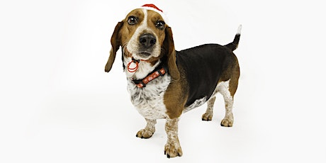 Holiday Photos for SAVE Ohio Pets tickets