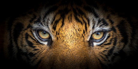 (WEBEX) Taming the Tiger: Bullying and Harassment to Civility and Respect tickets