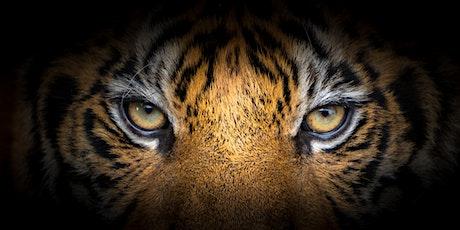 (WEBEX) Apprivoiser le tigre : Intimidation/harcèlement à civilité/respect billets
