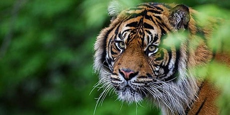The Art of Zoo Photography with Tal Chohan tickets