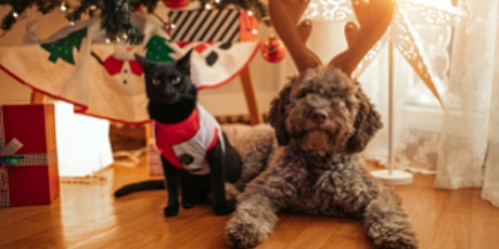 Online Holiday Pet Pajama Pawty tickets