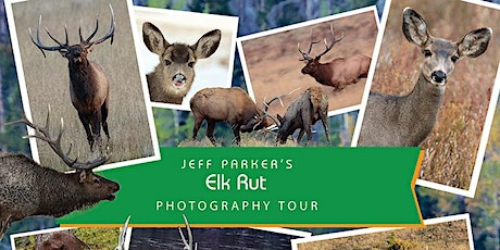 Rocky Mountain Elk Rut Photo Tour tickets