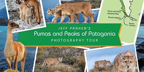 Pumas and Peaks of Patagonia Photo Tour entradas