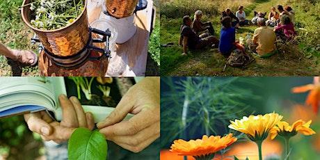 Formation aux plantes sauvages comestibles et médicinales - séance d'info billets
