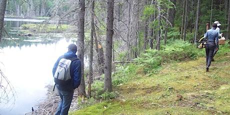 Initiation à la cueillette de plantes et champignons sauvages d'été tickets