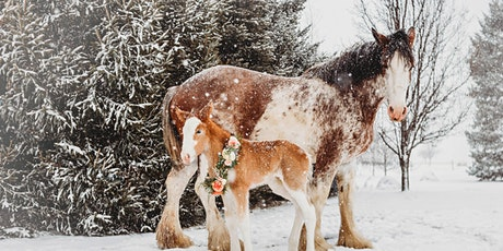 Christmas with the Clydesdales tickets