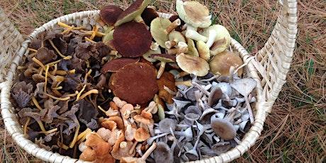Initiation à la cueillette de champignons sauvages, niveau 2 billets