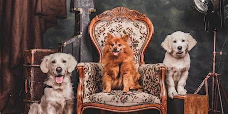 Kerstfotoshoot voor jouw hond. tickets