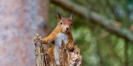 Beeston Wildlife Group Talk: HOW CAN WE RESTORE NATURE? Tim Birch tickets
