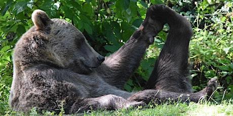 WILD Virtual- Zoo Yoga for Children tickets