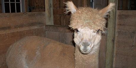 Christmas at Alpaca Pines Farm and Fiber Mill tickets