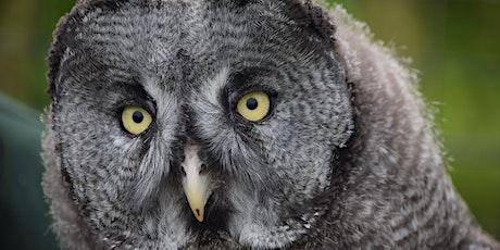 WILD Virtual- Zoo Mindfulness for Children tickets