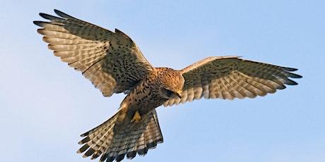 Webinar: Birds of Prey course online tickets