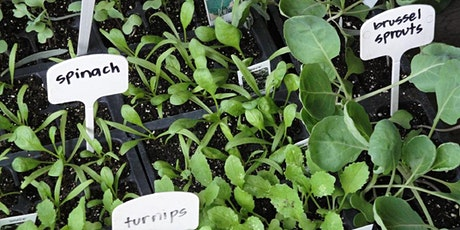From Seed to Seedling tickets