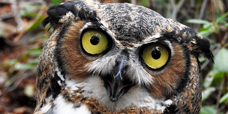 Owl Prowl at the Plainsboro Preserve tickets