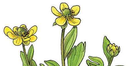 How to Draw Plants Step-by-Step tickets
