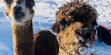 Alpaca Encounters tickets